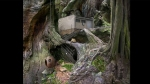Samorost, video game, gnome, anteater, woods, tree, hut